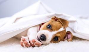 Wyprawka dla psa co musi zawierać?