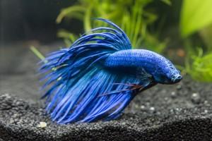 Pierwsze akwarium jakie rybki wybrać?