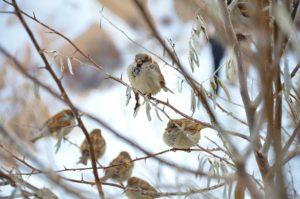 Dokarmianie ptaków zimą jaki karmnik wybrać?