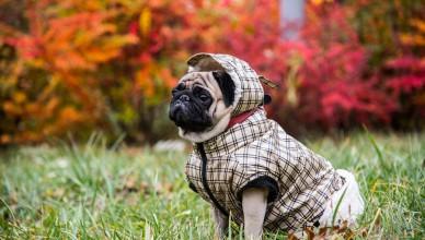 Czy warto zakładać psu ubranko poza sezonem zimowym?