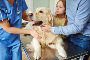 Jak rozpoznać, że pies jest chory?