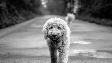 pies_na_drodze