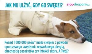"""Jak często drapie się Twój pies? Wystartowała II edycja kampanii społecznej ,,STOP DRAPANIU"""""""