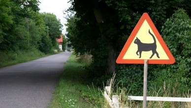 cat_warning_sign