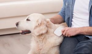 Jak dbać o psią sierść?