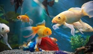Dlaczego warto mieć rybki?