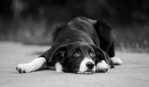 Pies nie człowiek, ale swoje prawa ma! Co warto wiedzieć o prawach zwierząt?