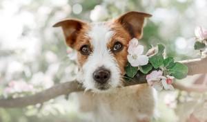 Jak dbać o czworonogi wiosną?