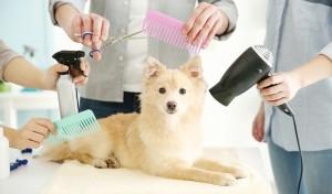 Dlaczego warto skorzystać z usług groomera?