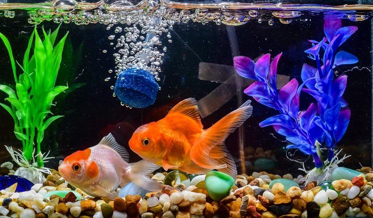 Jak udekorować akwarium?