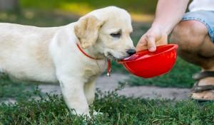 Jak opiekować się psem w lecie?