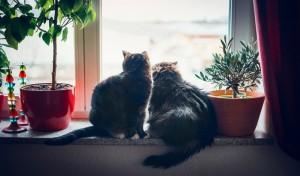 Co osiem łapek to nie cztery, czyli dlaczego warto zdecydować się na więcej niż jednego kota.