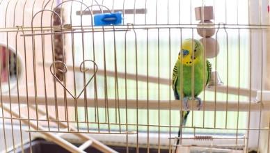 Zabawki dla ptaków, czyli jak urządzić klatkę?