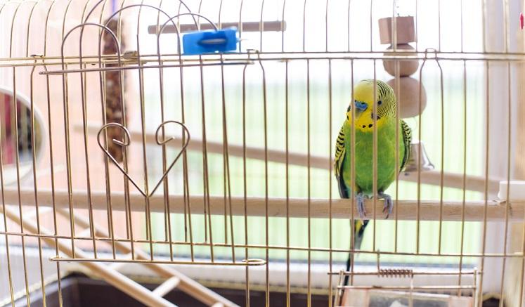 Papuga_w_klatce1