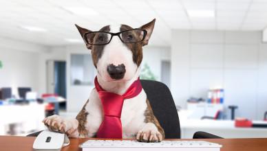 Jestem psem pracującym. Żadnej pracy się nie boję!