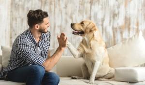 Czy wiesz, że…? Czyli 10 ciekawostek z życia psów.