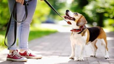 Jak zadbać o bezpieczeństwo pupila podczas spaceru?