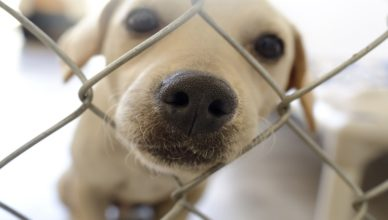 Dlaczego warto przygarnąć psa ze schroniska?