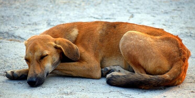 choroba stawów u psa
