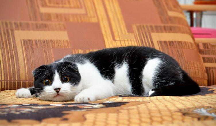 Kot boi się ogórków