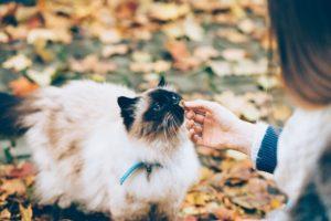 Ile powinien jeść kot?