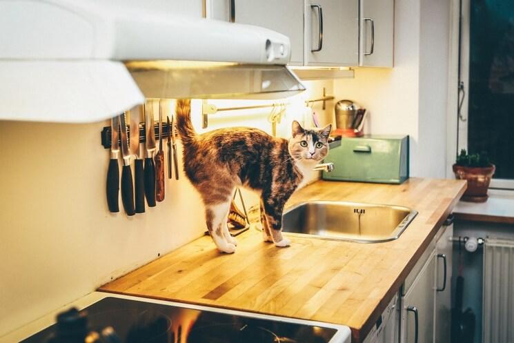 Ile razy dziennie karmić kota