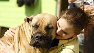 Jak pies okazuje miłość właścicielowi