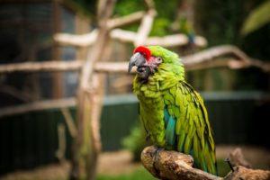 Jaki pokarm wybrać dla papug?