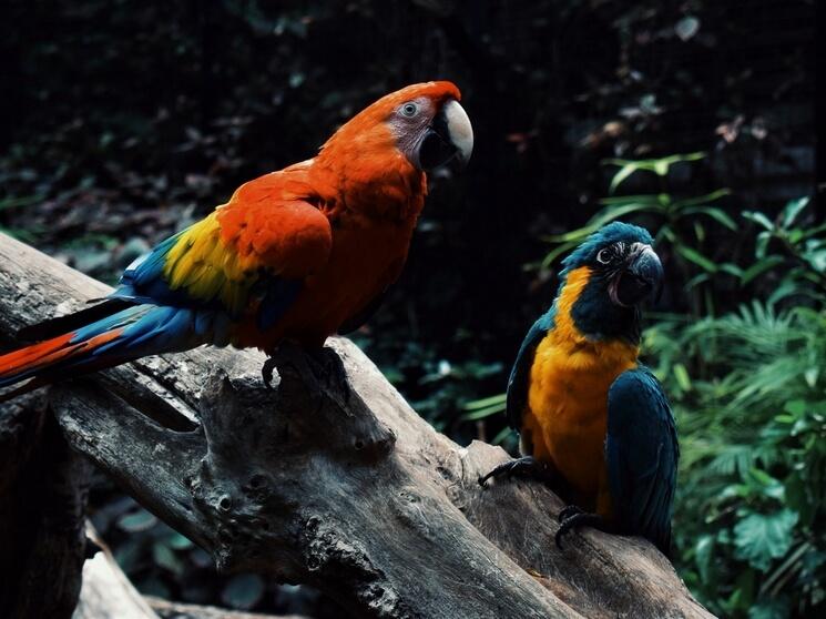 co jedzą papugi