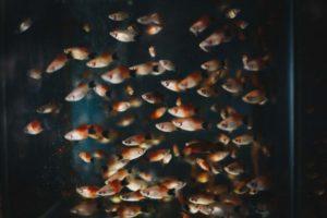 Rybki do małego akwarium – TOP5 najlepszych gatunków