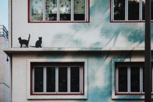Siatka ochronna dla kota – jak dbać o bezpieczeństwo na balkonie?