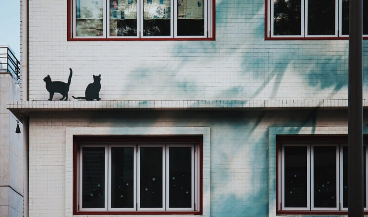 siatka ochronna dla kota