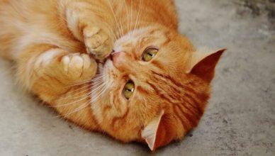 kot ugniata łapkami