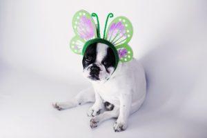 Perfumy dla psa: fanaberia opiekuna czy ulga dla psa?