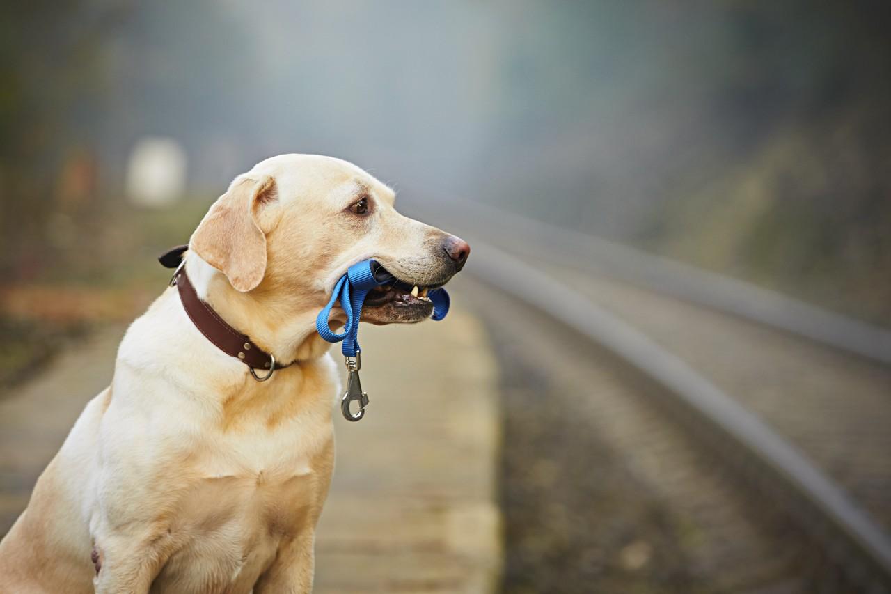 pies przy drodze w obrozy