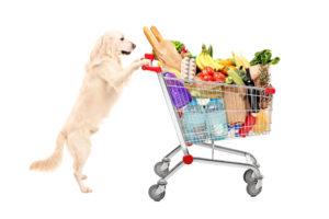 5 rzeczy, o których warto pamiętać podczas kupowania wyprawki dla psa