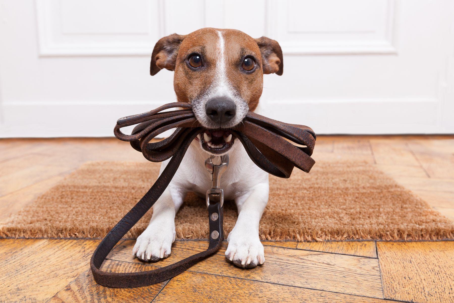 wyprawka dla psa - jaką wybrać?