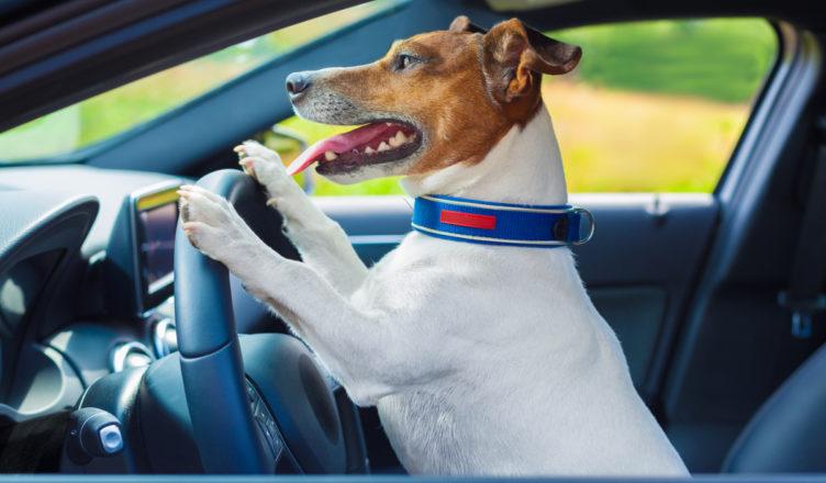 podróż z psem samochodem