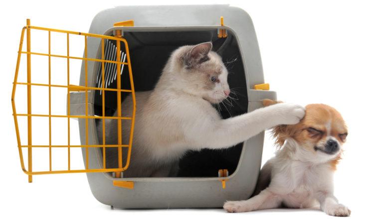 pies i kot w podróży