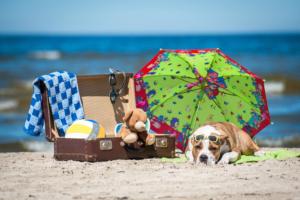 Wakacje z psem lub kotem – jak bezpiecznie przewieźć pupila?