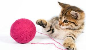 Jak wybrać zabawki dla kota?