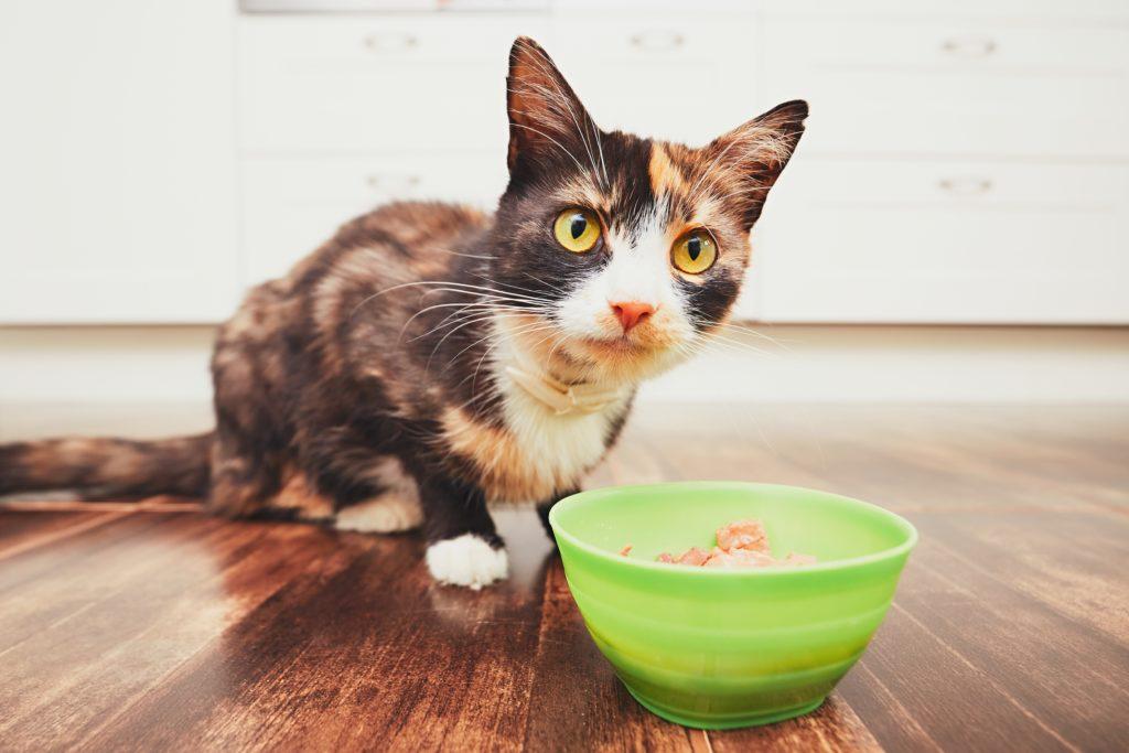 Dobrej jakości karma dla kota