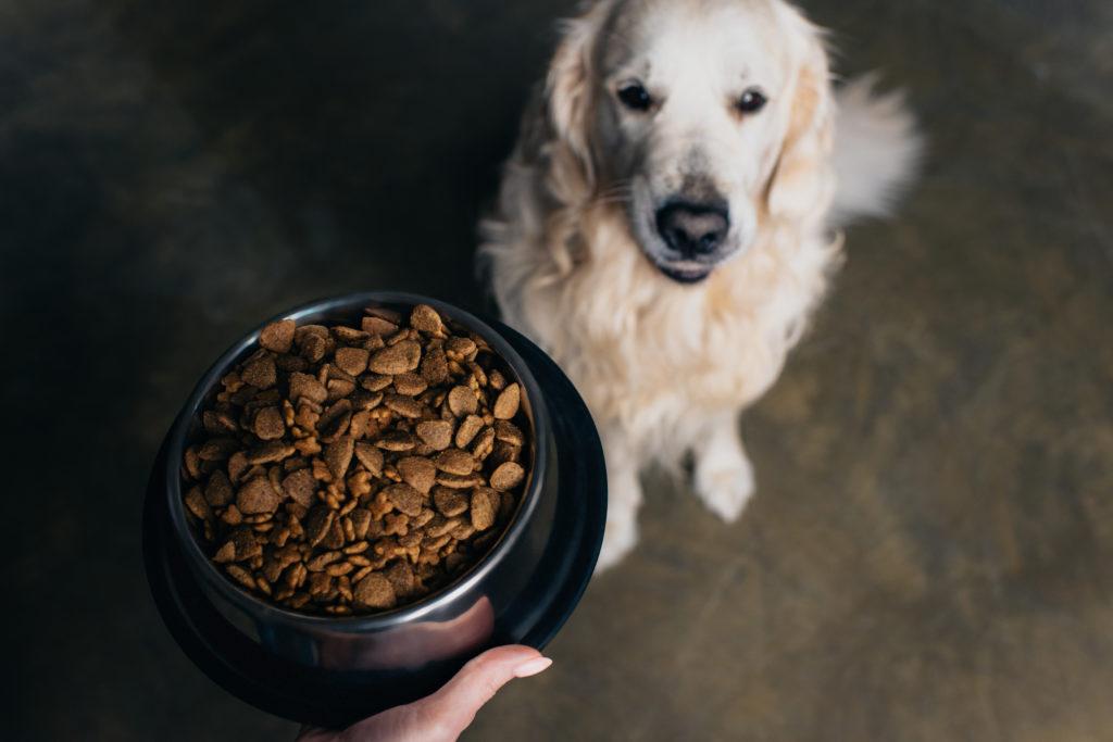 Karma dla psa z długą datą ważności