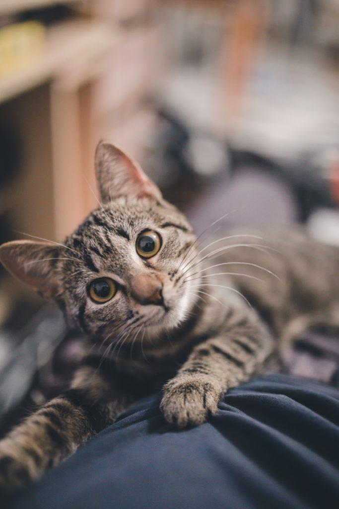 Zdjęcia kotów - portret kota