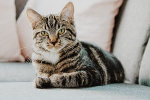 Koty i ich tajemnice. Sprawdź, czy wiesz o nich wszystko.