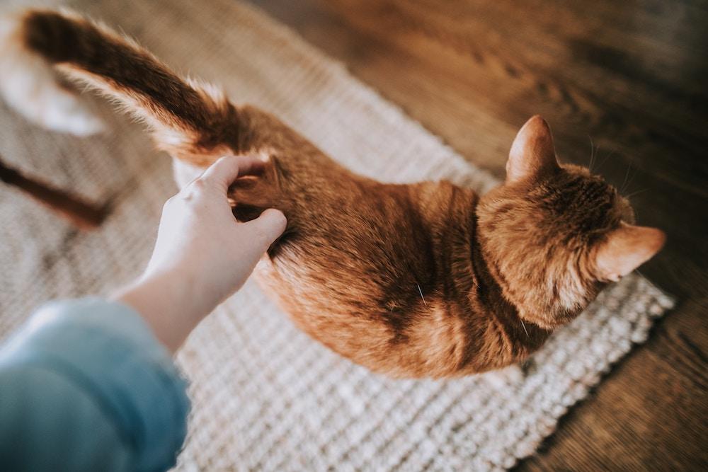 zachowanie kota