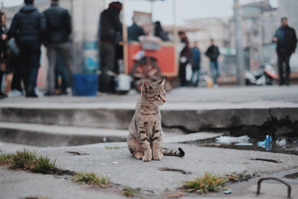 Kotek siedzący na chodniku