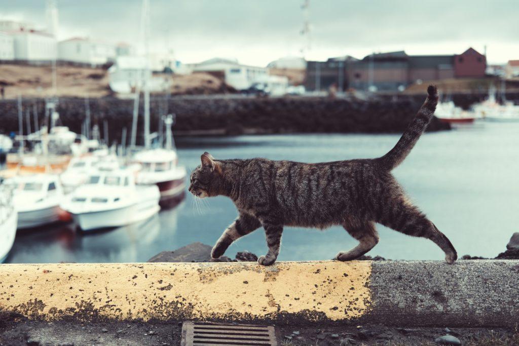 Bury kot na spacerze w porcie