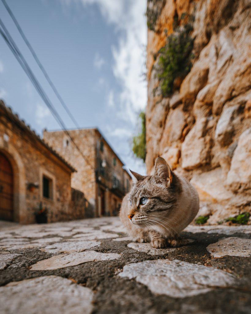 Kot siedzący na ulicy