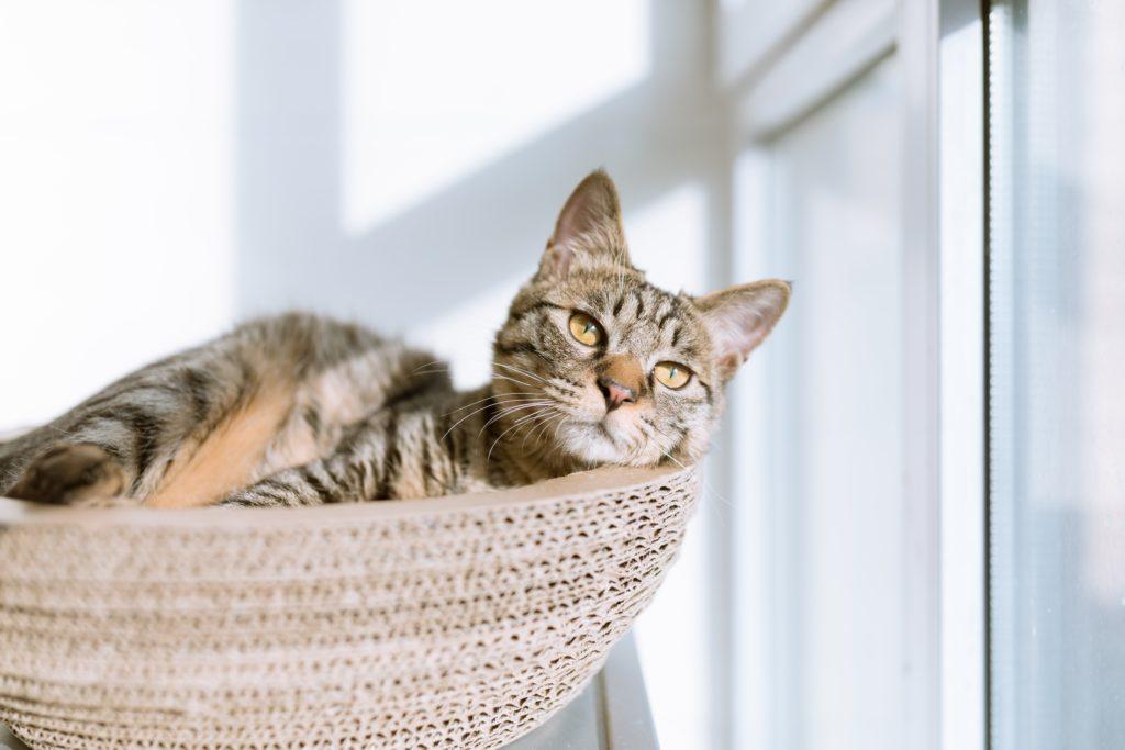 Zdjęcie kota leżącego w drapaku